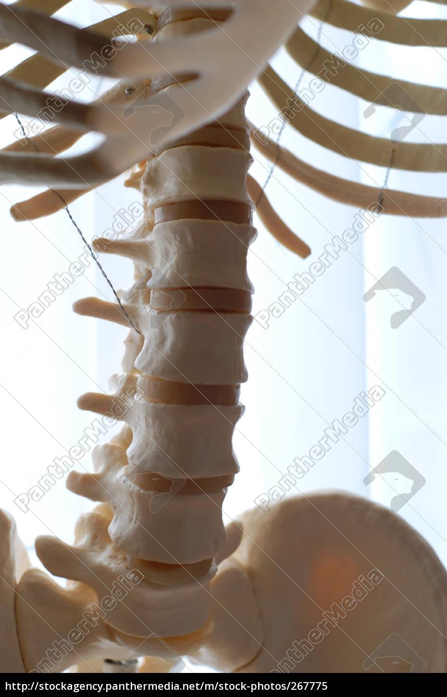 skeleton, 05 - 267775