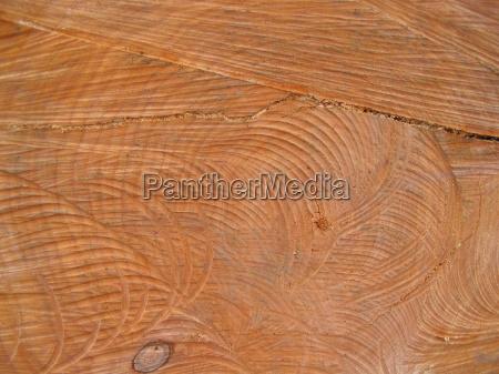 wood trunk annual rings deforestation woody
