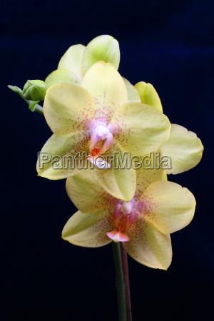 orchidaceae, (19) - 272951