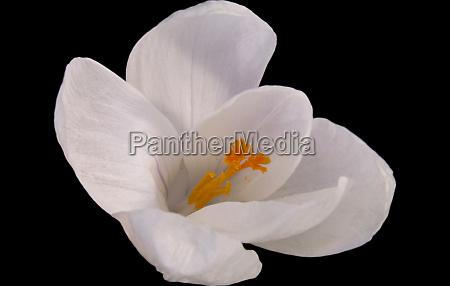 close up opcional jardim flor planta