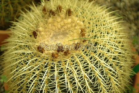 captivatingly 3 cactus