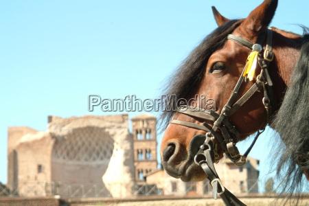 pferdekopf ago ruin