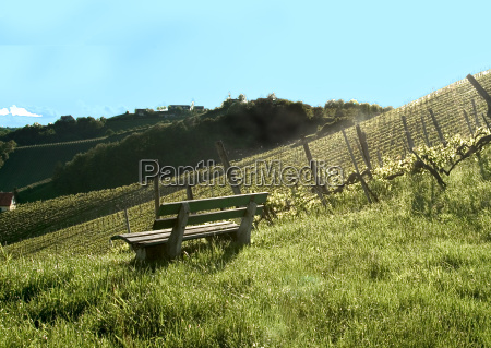 vineyard 5