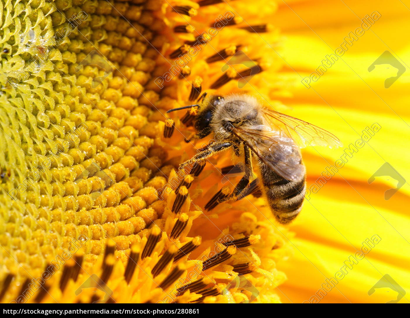 nectar - 280861