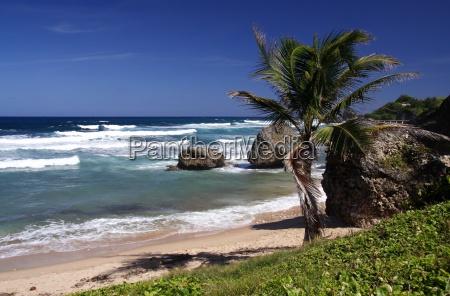 tropical, beach - 280849