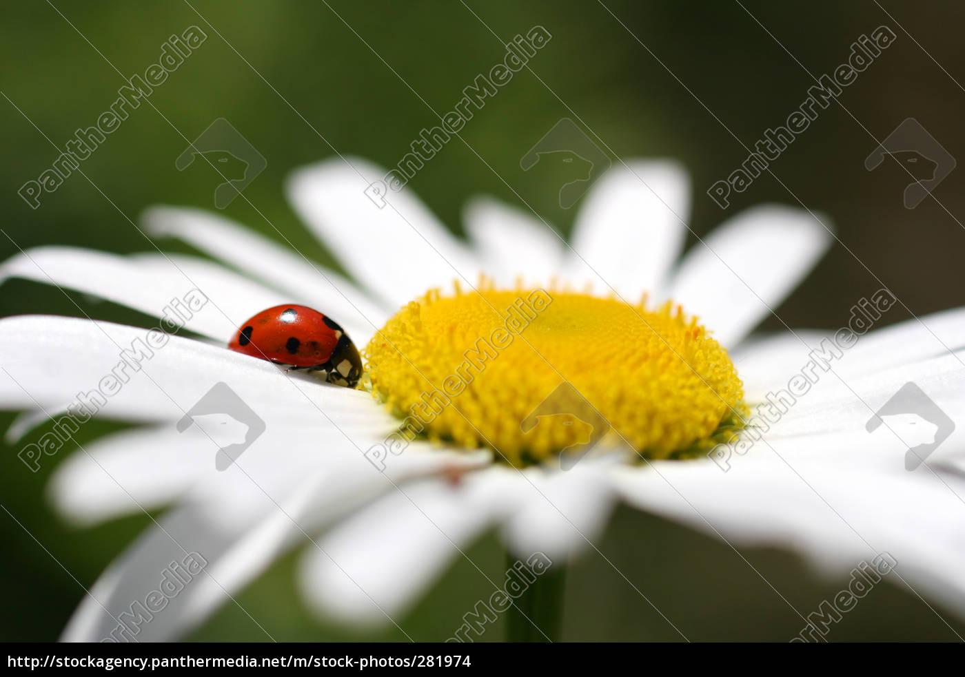 ladybird - 281974