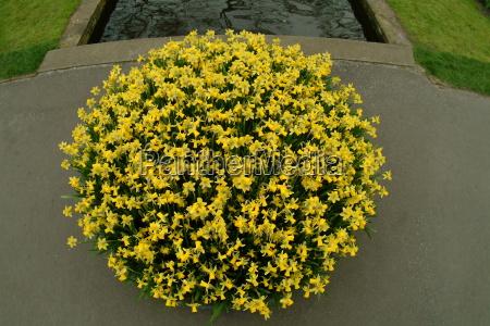 yellow flowerpot