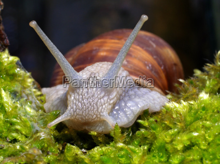 snail, 1 - 282484