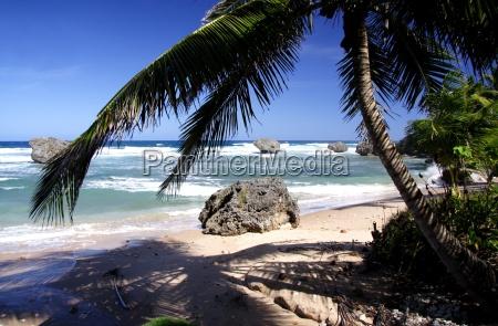wild, tropical, beach - 284606