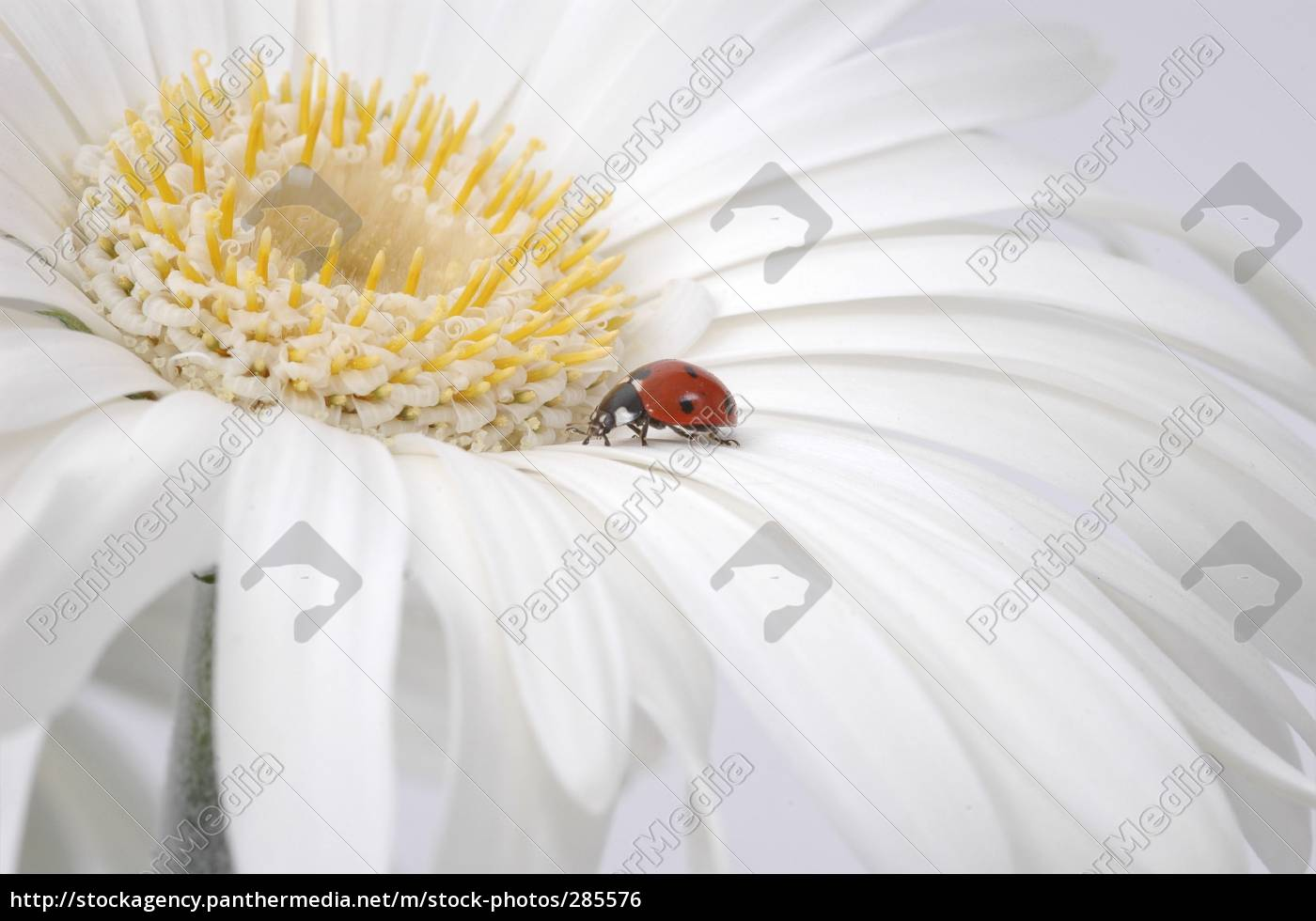 beetle, on, tour - 285576