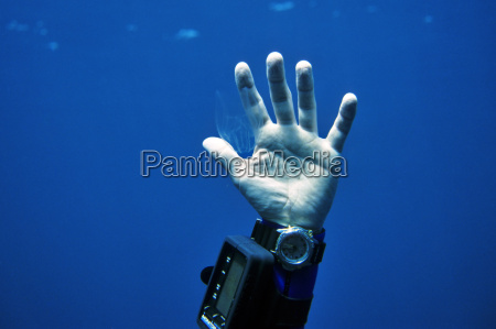 jellyfish, in, hand - 285445