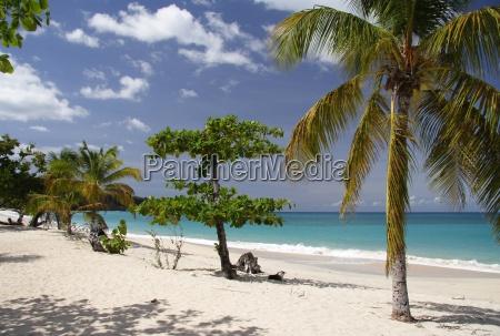 palm, beach - 289936