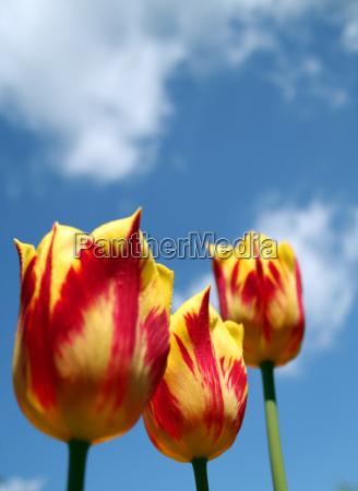 spring awakening 1