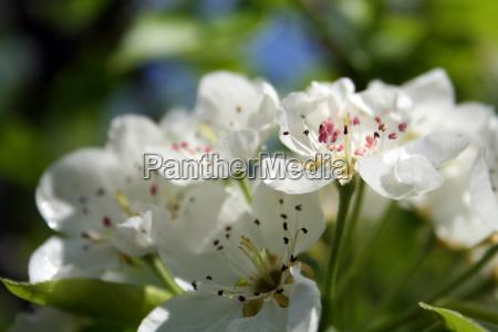 spring awakening 5
