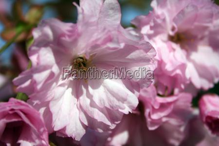 spring awakening 7