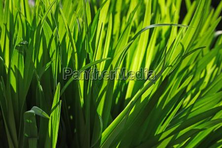 grasses - 295961