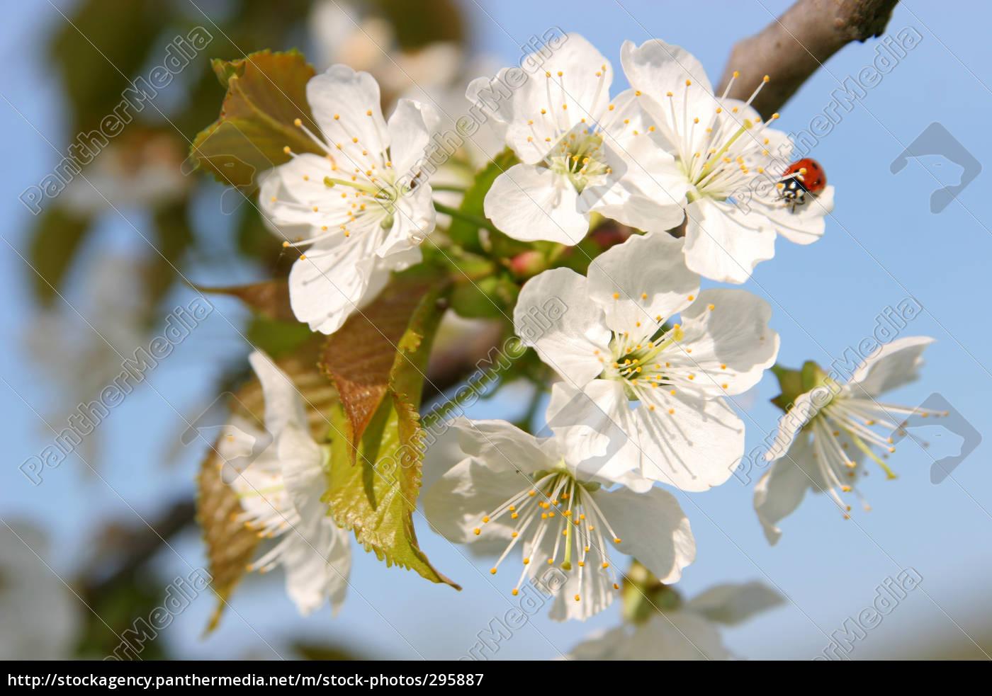 ladybug, in, flower, tree - 295887