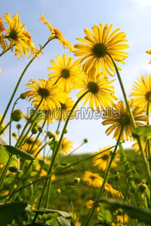 sunbather - 295921