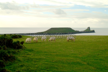 sche for worms head