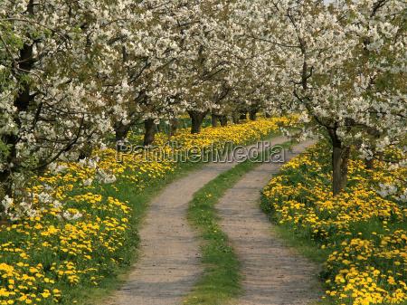 flowers, among, flowers - 298282
