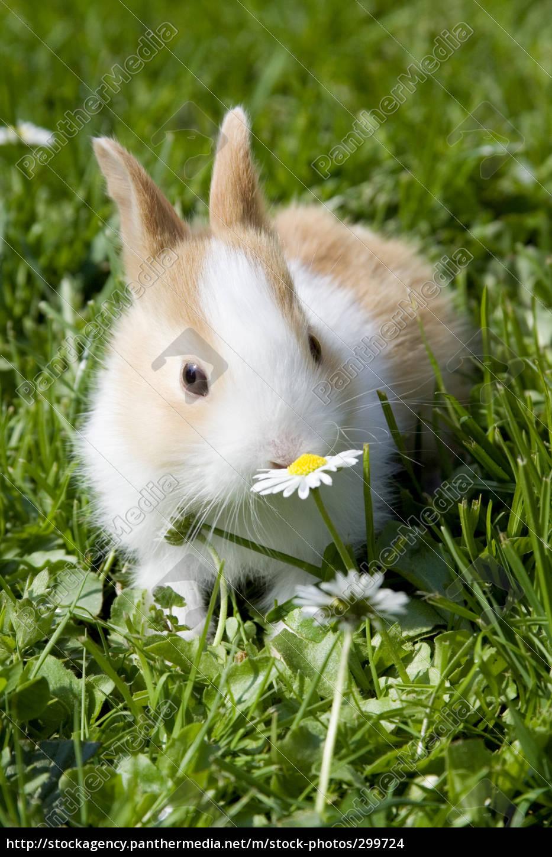 the, little, bunny - 299724