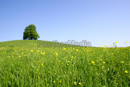 spring, meadow - 300623