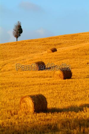 strohballentreewheat field