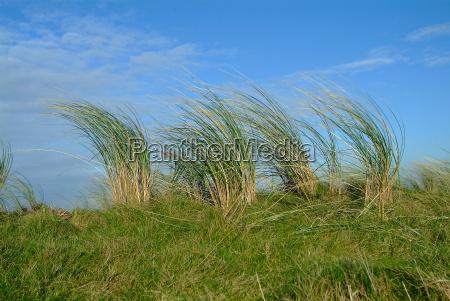 grass on dune