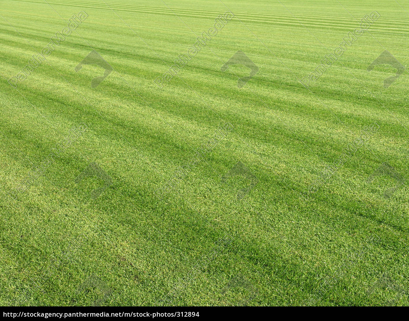 lawn, 2 - 312894