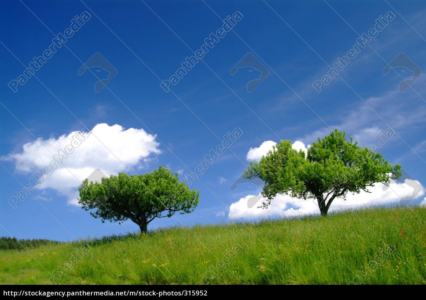 tree, with, sky, 3 - 315952