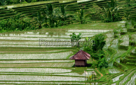rice, terraces, 3 - 318806