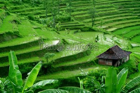 rice, terraces, 5 - 318846