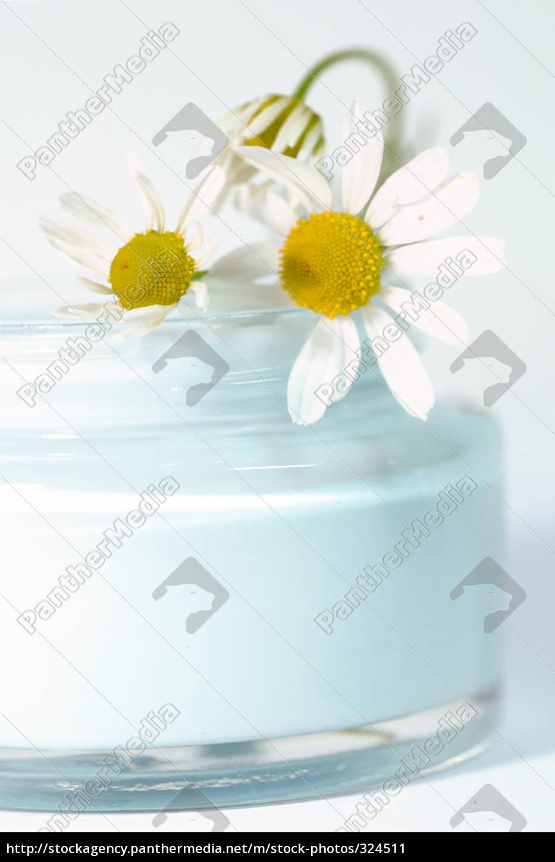 chamomile, cream - 324511