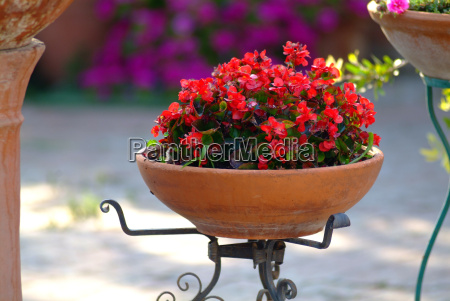 flowerpot with red flowers
