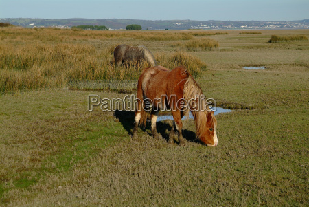 horse in salt march