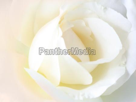 my, favourite, flower - 335687