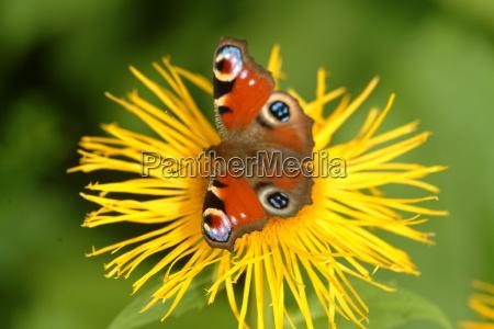 butterfly on flower 2