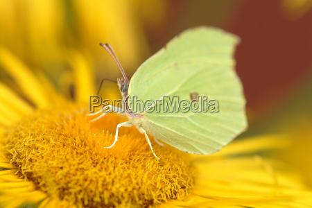 butterfly on flower 3
