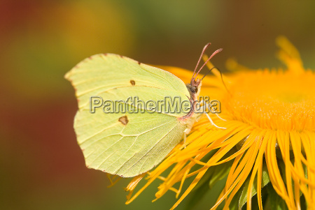 butterfly on flower 5