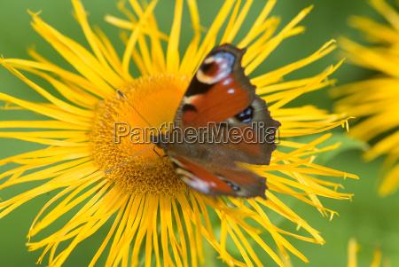 butterfly on flower 7