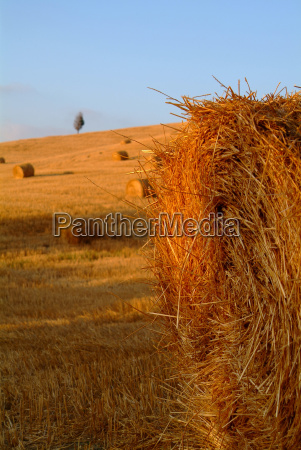 straw bales on wheat field 18