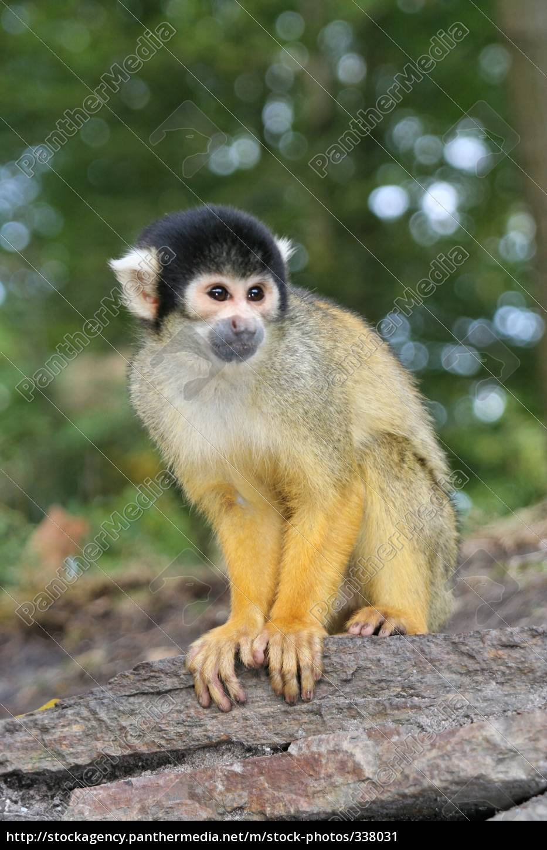 squirrel, monkeys - 338031