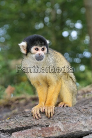 squirrel, monkeys - 338031