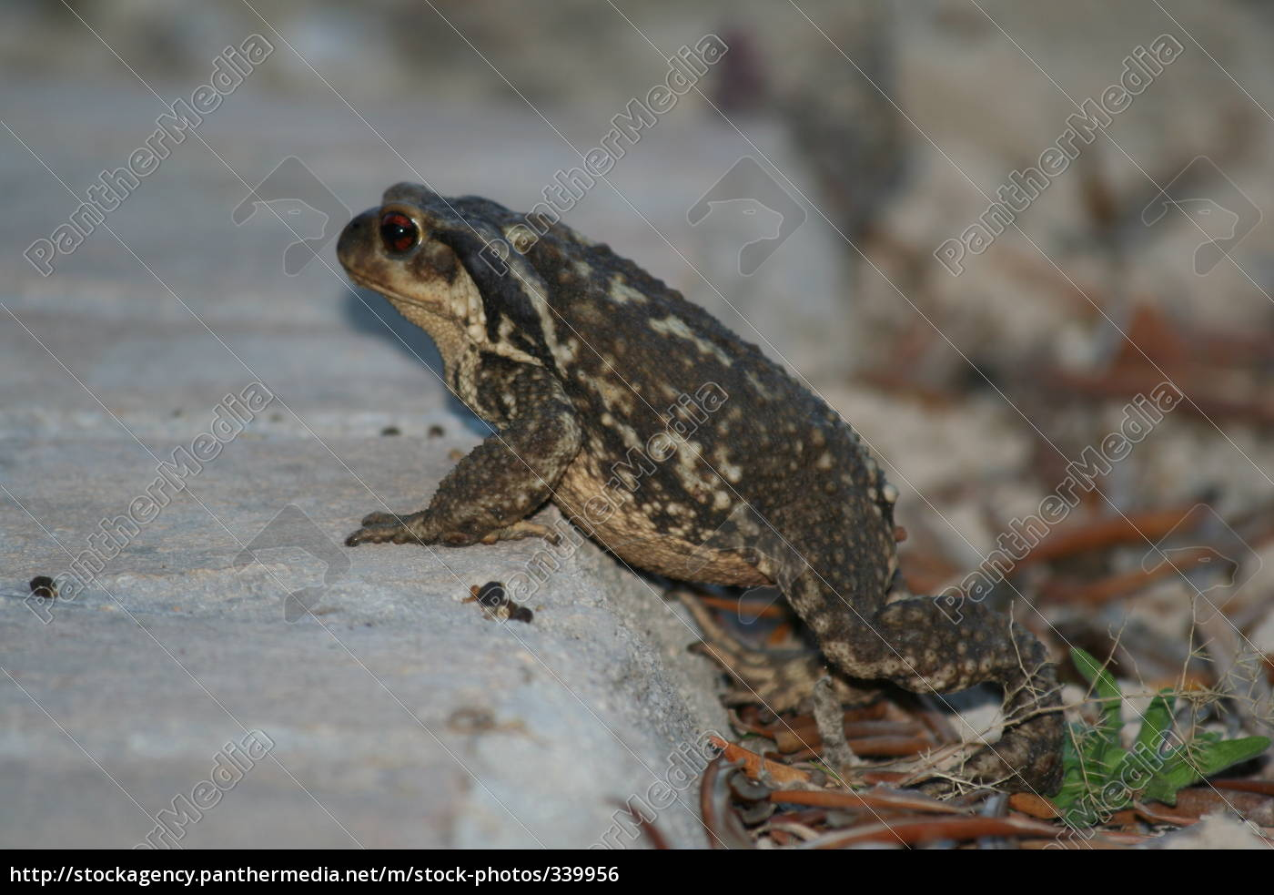 toad, on, the, road, to, civilization - 339956