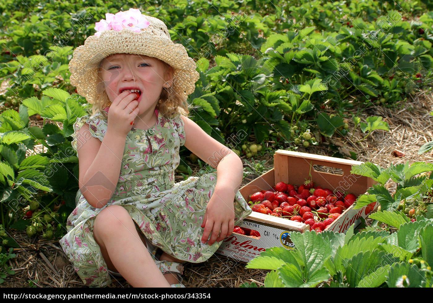 fresh, strawberries - 343354