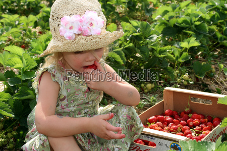 strawberry, pickers - 343363