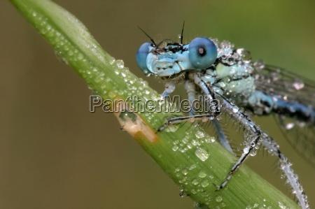 dragonfly, portrait - 353341