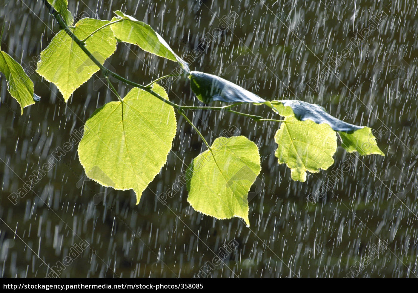 leaves, in, rain - 358085