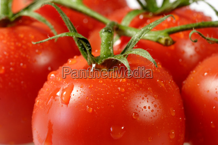 tomatoes - 361417