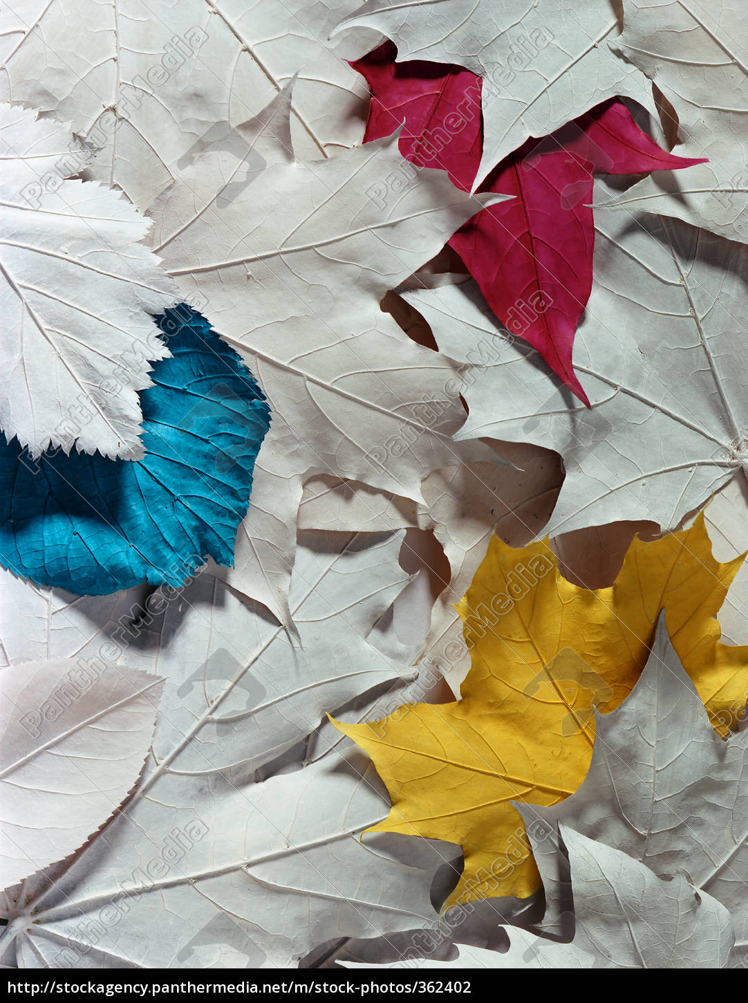 leaves, colors, cmyk, autumn - 362402